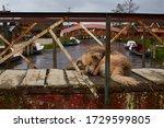 Tender dog sleeping on wood bridge in the La Cocha lagoon in Pasto, Nariño Colombia