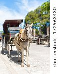 Horse Carriage Waiting For...