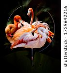 Flamingos Abstract Artwork In...