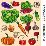 preview variety of vegetables... | Shutterstock .eps vector #172992326