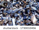 Mussel And Other Shells On A...