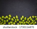 Hop Cones At Harvest Time  Top...