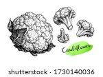 Cauliflower. Ink Sketch...