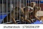 Unhappy Cute Prairie Dog Cub...