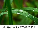 Green Grass With Drops Of Water ...