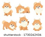 The Collection Of Pomeranian...