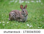Wild Bunny In The Green Meadow