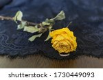 A Dried Yellow Rose And A...