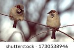 Selective Focus. A Pair Of...