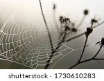 Wet Spider's Net On The Bushes