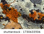 Lichens In Various Shapes ...