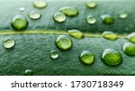 Macro Dew Drops On Green Leaf....