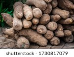 Small photo of Yams, a staple crop, are stacked at a yam festival in Ghana, West Africa.