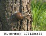 Spiral Shell  Forest Snail...