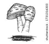 sketch of parasol mushroom.... | Shutterstock .eps vector #1731316303