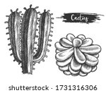 cactus plant with flower.... | Shutterstock .eps vector #1731316306