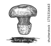 spike cap or slimy spike cap... | Shutterstock .eps vector #1731316663