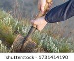 Shovel In Male Hands. Work In...