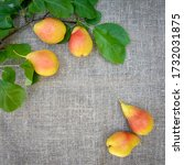harvest of ripe yellow red... | Shutterstock . vector #1732031875