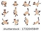 Cats Yoga. Siamese Cats....