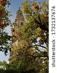 Orange tree against bell tower (the most representative tower in the city) of Seville Cathedral  (Seville Giralda)