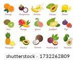 tropical fruits set. orange ... | Shutterstock .eps vector #1732262809