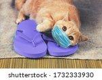 Ginger Cat Lying On Flip Flops...