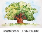 Watercolor drawing of broad-leaved green tree isolated on the white background. Illustration of big foilage tree.
