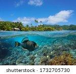 Seascape Tropical Coast And...