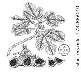 vector sketch fruit decorative... | Shutterstock .eps vector #1732886510