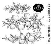 vector sketch citrus fruit... | Shutterstock .eps vector #1732886513