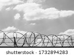Black Coiled Barbed Wire Fence...