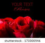 Stock photo red rose flower isolated on black background beautiful dark red rose closeup symbol of love 173300546