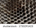 Hive Wasp Texture With A Lot O...