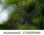 Spider Web In Forest Close  Up