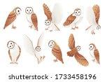 Set Of Cute Barn Owl  Tyto Alb...