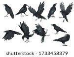 Set Of Black Raven Bird In...