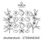 vector sketch peach decorative... | Shutterstock .eps vector #1733646263