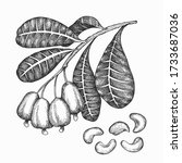 hand drawn sketch cashew branch.... | Shutterstock .eps vector #1733687036