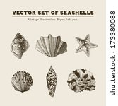 Set of vector vintage seashells. Five illustrations of shells and starfish on a beige background.
