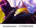 Macro Of Iris Details. Closeup...