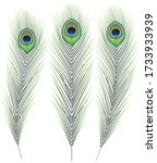 peacock feather isolated on...   Shutterstock .eps vector #1733933939