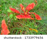 Orange Day Lily Flower On Green ...