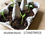 Growing Plants On A Eggs Box