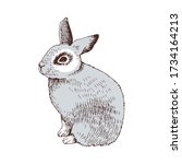 hand drawn bunny vector... | Shutterstock .eps vector #1734164213