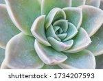 Green Close Up Of Succulent...