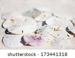 Stack of sand dollars at beach - stock photo