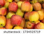 Bunch Of Apples  Scientific...