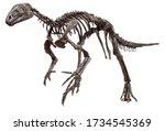 Hypsilophodon Foxii  Dinosaur...