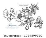 sketch floral botany collection.... | Shutterstock .eps vector #1734599330